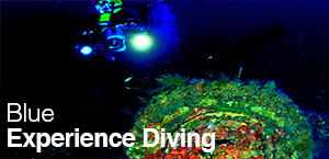 blu-experience-diving